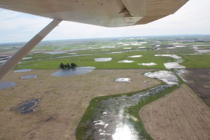Campos inundados loberia (6)
