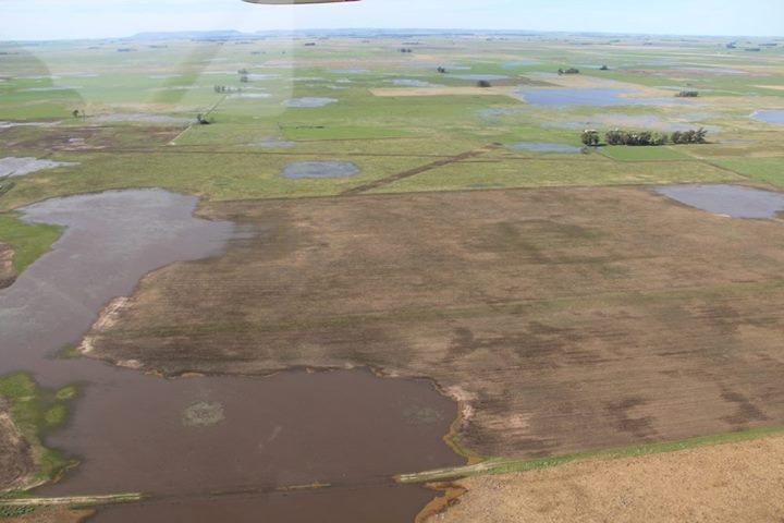 Campos inundados loberia (7)