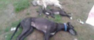 Perros envenenados Barrio Belgrano